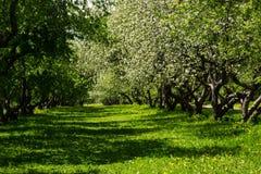 jabłczana ogrodu zdjęcia wiosna kwiat Fotografia Stock