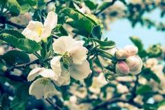 jabłczana ogrodu zdjęcia wiosna kwiat kreatywne zmięty obraz mieszane projekt notaci tekstury wykorzystanie starego biura papier  Obrazy Stock