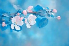 jabłczana ogrodu zdjęcia wiosna kwiat tło mleczy spring pełne meadow żółty wiosna kwiat Zdjęcia Royalty Free
