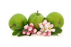 jabłczana okwitnięcia kwiatu owoc zdjęcia stock