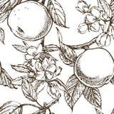 Jabłczana okwitnięcie gałąź odizolowywająca na bielu Rocznik botaniczna ręka rysująca ilustracja Wiosna kwiaty jabłoń ilustracja wektor
