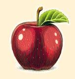 Jabłczana owoc z zielonym liściem Narys deski styl Zdjęcie Royalty Free