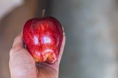jabłczana ręka wręcza s czerwonej dojrzałej kobiety gwoździom Obrazy Stock