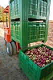 jabłczana wysyłka Zdjęcia Stock