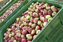 jabłczana wysyłka Obrazy Stock
