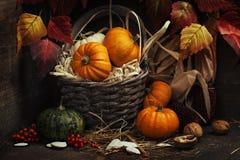 jabłczanego jesień świeczek składu susi liść target2422_0_ wazę fotografia royalty free