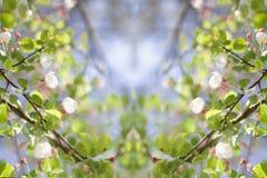jabłczanego złożonego kraba kreatywnie kwiatonośna wiosna Zdjęcia Stock