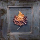 jabłczanej jesień piękny kwiecisty ramowy liść ornamentu obrazek Fotografia Stock