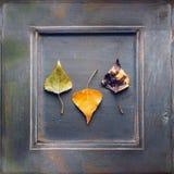 jabłczanej jesień piękny kwiecisty ramowy liść ornamentu obrazek Obraz Stock