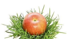 jabłczanej tła trawy czerwony biel Zdjęcie Royalty Free