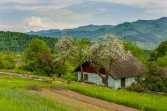 Jabłczani kwiaty kwitną w wiośnie piękny słoneczny dzień zdjęcia stock