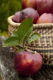 jabłczany żniwo Fotografia Stock