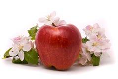 jabłczany czerwony dojrzały Zdjęcia Stock