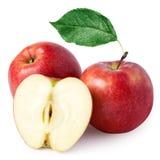 jabłczany czerwony dojrzały Fotografia Royalty Free