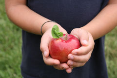 jabłczany dziecko wręcza błyszczącą liść trzymającą czerwień s Zdjęcia Stock