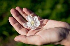 jabłczany kwiatu istoty ludzkiej drzewko palmowe zdjęcia stock