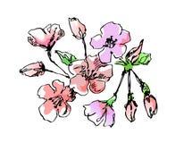 jabłczany okwitnięcie ilustracja wektor