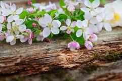 Jabłczany okwitnięcie na drewnianej desce obraz royalty free