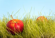 jabłczany sad Obrazy Stock