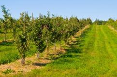 jabłczany sad Obraz Royalty Free