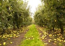 jabłczany sad Fotografia Royalty Free
