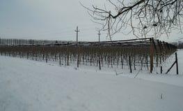 Jabłczany sad zakrywający z śniegiem podczas zima czasu Obraz Stock