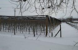 Jabłczany sad zakrywający z śniegiem podczas zima czasu Fotografia Royalty Free