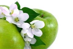 jabłczanych jabłek kwiatów drzewny biel Zdjęcia Royalty Free