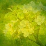 jabłczanych tła kwiatów zielona wiosna Obraz Royalty Free
