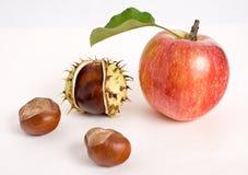 jabłek kasztanu czerwień Zdjęcie Royalty Free