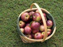 jabłek kosza czerwień obrazy royalty free