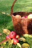 jabłek kosza czerwień Zdjęcia Royalty Free