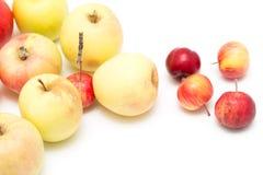 jabłek tła fotografii serie biały Zdjęcie Stock