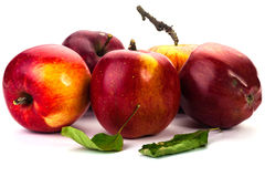 jabłek tła fotografii serie biały Fotografia Stock