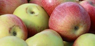 jabłka świezi Fotografia Royalty Free