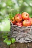 jabłka świezi zdjęcia stock
