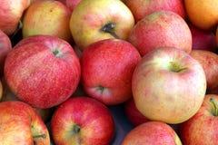 jabłka Obrazy Royalty Free