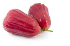 jabłka chomphu wzrastał Obrazy Royalty Free