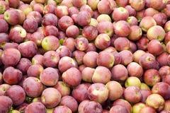 jabłka dużo Zdjęcie Royalty Free