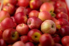 jabłka grupują czerwień Zdjęcia Royalty Free