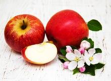 Jabłka i jabłoni okwitnięcia Fotografia Stock