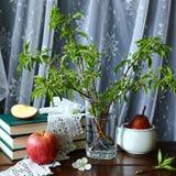Jabłka i książki zdjęcie royalty free