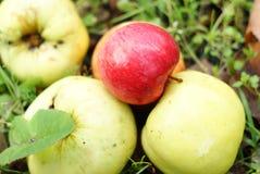 Jabłka kłama na ziemi zdjęcie royalty free