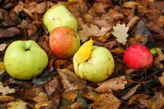 Jabłka kłamstwo na ziemi zdjęcie royalty free