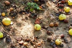 jabłka mielone fotografia stock