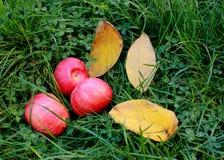 Jabłka na trawie zdjęcia stock