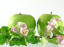 jabłka oddział drzewo Obrazy Stock