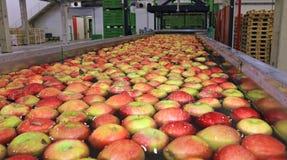 Jabłka pakuje magazyn obraz stock