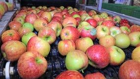Jabłka pakuje magazyn obrazy stock
