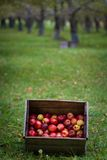 jabłka pudełko Fotografia Stock